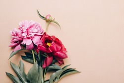 Beautiful peonies on beige background. Mother's day or other holiday background.
