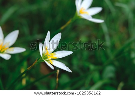Free photos six petals yellow flowers in nature avopix beautiful 6 petal white flowers on natural green background 1025356162 mightylinksfo