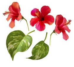 beautiful photo of hibiscus flowers and tropical leaves. Single elements isolated on white. Floral motifs.