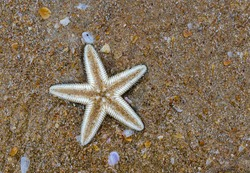 Beautiful photo of starfish also known as sea star of family Asteroidea with beach sand background. It is beached up dead due to strange weather patterns due to climate change and global warming.