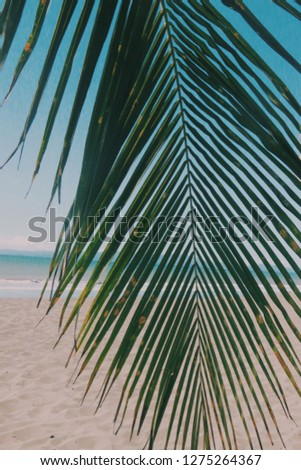 beautiful photo of the beach with a super cute palm tree