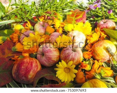 Beautiful photo with apples, red leaves, flowers calendula and herbs  on a wooden  background. Vintage art autumn background.Thanksgiving Day template. #753097693