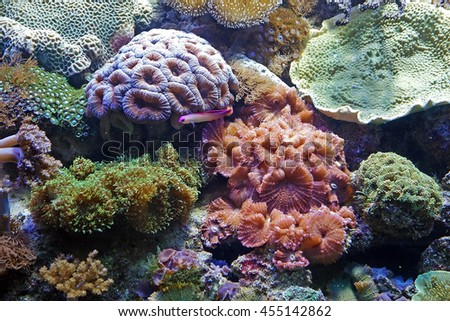 Beautiful photograph of colorful coral reef and algae aquatic plants in the Barcelona aquarium, Spain. Wild nature background. The underwater world. stock photo