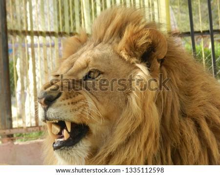Beautiful photos of pets and predators from Algeria Zoo From creative photographer Hamza #1335112598