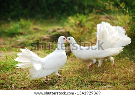 beautiful picture of a romantic couple dove