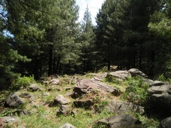 Beautiful Picture of Forest with Rocks and Trees in Azad Jammu and Kashmir