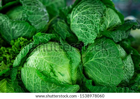 Beautiful picture of fresh green kale