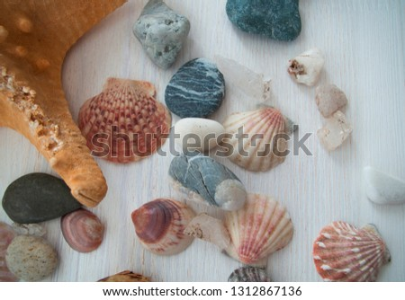 Beautiful picture with a lot of shells and a brown starfish. Close-up. The top view. Colorful background. Natural beauty.