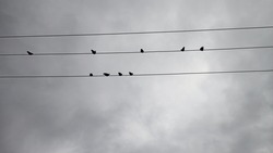 Beautiful Pigeons sitting on electrical wires in a cloudy sky Early Morning Photos Nature Photography Domestic Birds Images