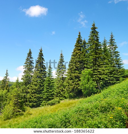 Beautiful pine trees in mountains.                                     #188365622