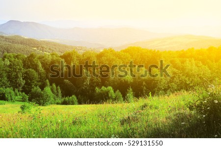 Beautiful pine trees on background high mountains #529131550