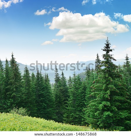 Beautiful pine trees on background high mountains. Carpathians                               #148675868