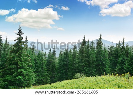 Beautiful pine trees on background high mountains. Carpathians     #265161605