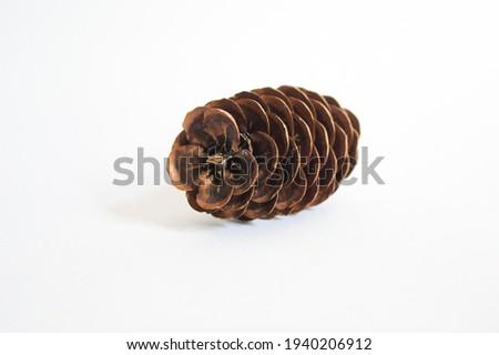 beautiful pinecone  flower shape pinecone Stock photo ©