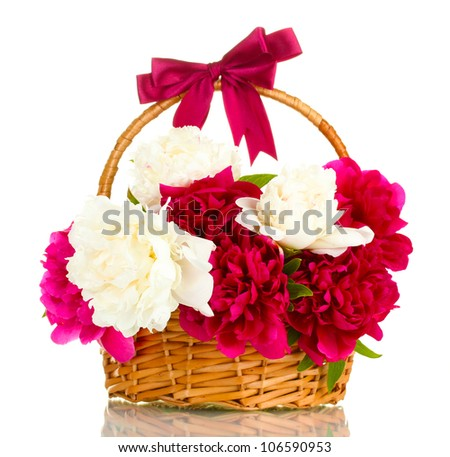 beautiful pink and white peonies in basket with bow isolated on white - stock photo