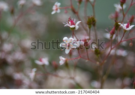 beautiful pink and white small open flower
