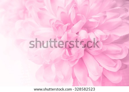 Beautiful pink chrysanthemum flowers in soft style for background #328582523
