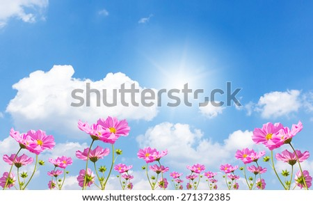 Beautiful pink flowers and Blue sky with cloud #271372385