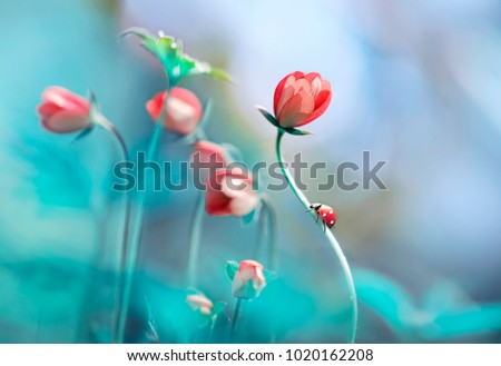 Beautiful pink flowers anemones and ladybug in spring nature outdoors against blue sky, macro, soft focus. Magic colorful artistic image tenderness of nature, spring floral wallpaper