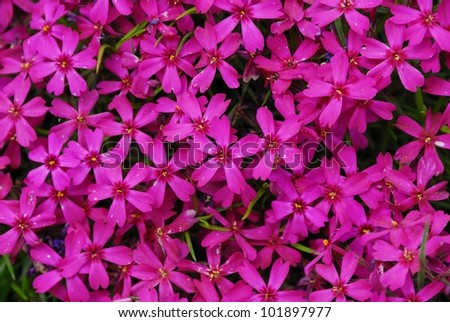 Beautiful pink flowers background