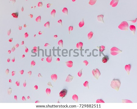Beautiful pink flowers background, decorative background for things