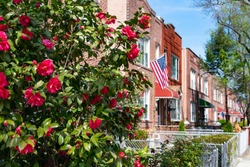 Beautiful Pink Flowers during Spring along a Row of Old Brick Homes with an American Flag in Astoria Queens New York