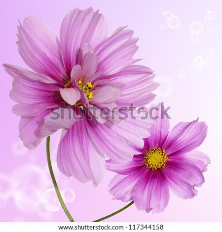 Beautiful pink flowers. Flower card
