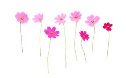 Beautiful pink flowers isolated on a white background