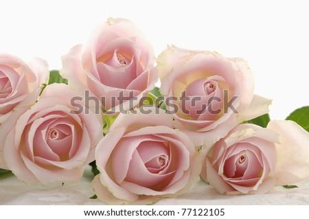 beautiful pink flowers roses