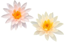 Beautiful Pink lotus flower bouquet isolated on the white background. Photo with clipping path.