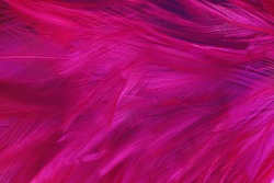 Beautiful pink magenta lines feather texture pattern background
