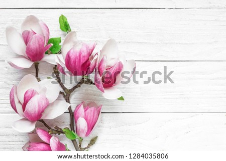 Beautiful pink magnolia flowers on white table with copy space for your text. top view. flat lay. wedding or womens day background