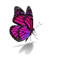 Beautiful pink monarch butterfly isolated on white background