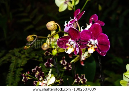 Beautiful pink orchid - detail of a house plant flower. #1382537039