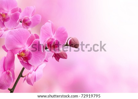 beautiful pink orchid flower #72919795