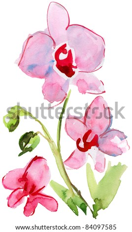 beautiful pink orchid flower. watercolor