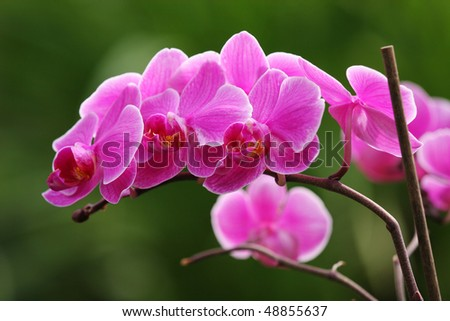Beautiful pink orchid flowers