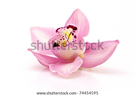 Beautiful pink orchid on white background #74454595
