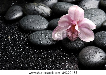 beautiful pink orchid with pebble in water drops