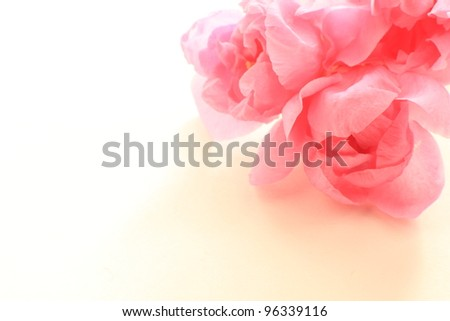 Beautiful Pink Peach flowers for Chinese New Year background image