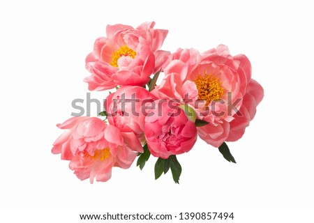 Photo of  beautiful pink peonies flowers isolated on white background