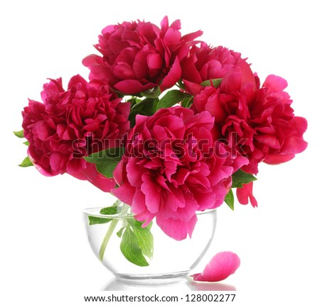 beautiful pink peonies in glass vase isolated on white
