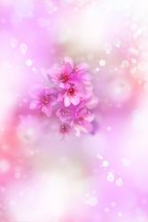 Beautiful pink purple flower background, spring background with sunshine.
