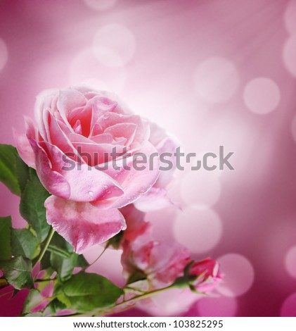 Beautiful pink rose with purple bokeh background
