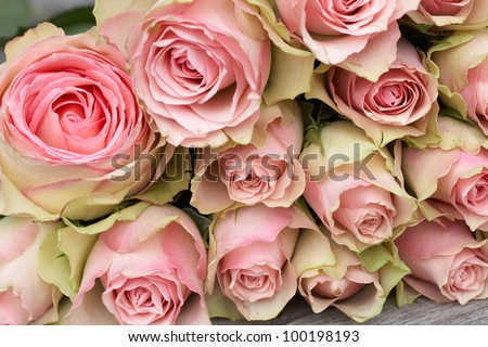 Beautiful pink roses background #100198193