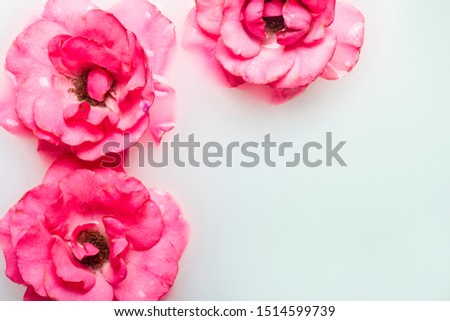 Beautiful pink roses in a milk bath. Concept of spa treatments, relaxation, spa treatments, therapy