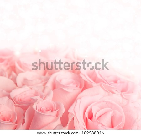Beautiful pink roses on pastel background with lights and stars