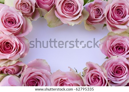 Beautiful pink roses with white card close-up