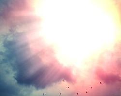 Beautiful pink sky and sun beams