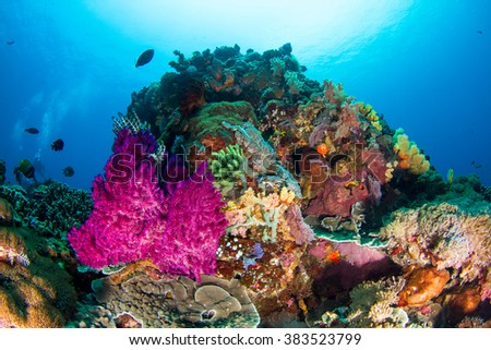 Beautiful pink soft coral growing from another coral formation at Nusa Penida healthy reefs. Indonesia. #383523799
